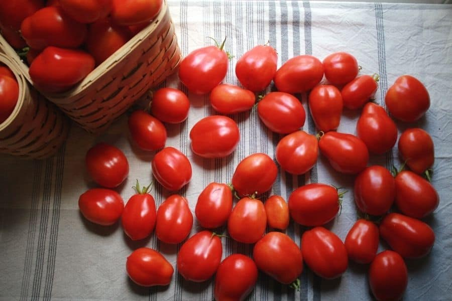 dozens of fresh tomatoes laying on a white and grey dish towel sitting next to a basket filled with more tomatoes