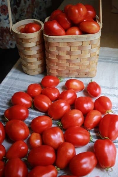 a basket filled with summer tomatoes sitting next to dozens of tomatoes laying on a white and grey dish towel