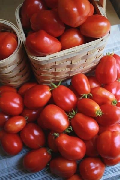 dozens of summer tomatoes piled up on a white and grey dish towel sitting next to a basket