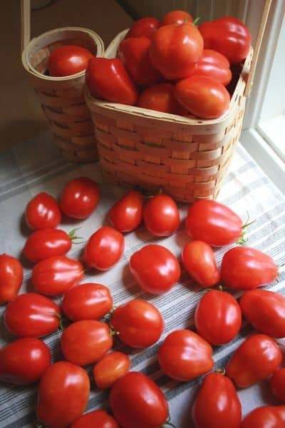 dozens of summer tomatoes laying on a white and grey striped dish towel next to a basket